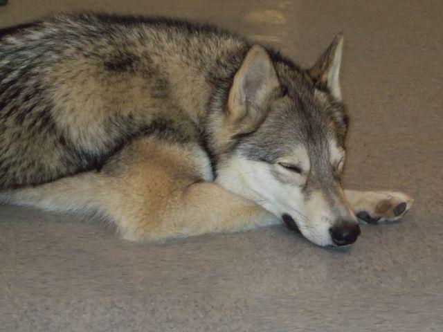 Dog Overnight Care Buffalo, NY