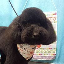 Dog Grooming Buffalo, NY