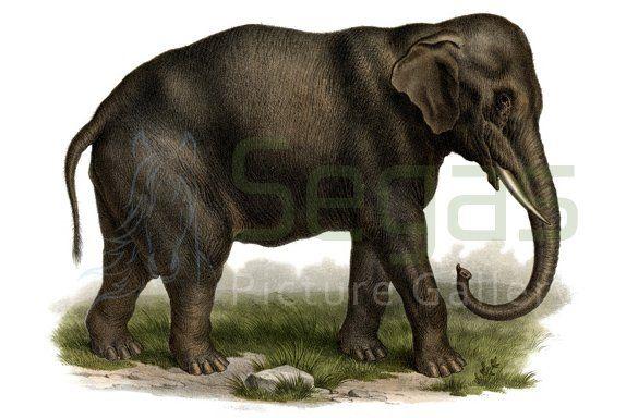 graphic of elephant
