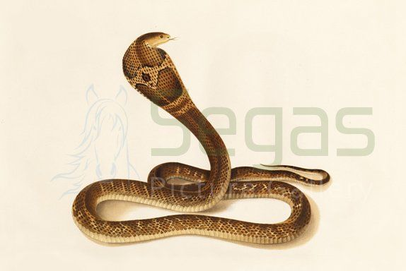 graphic of snake