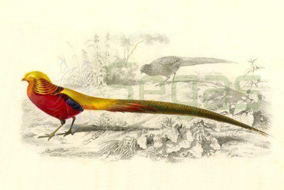graphic of bird