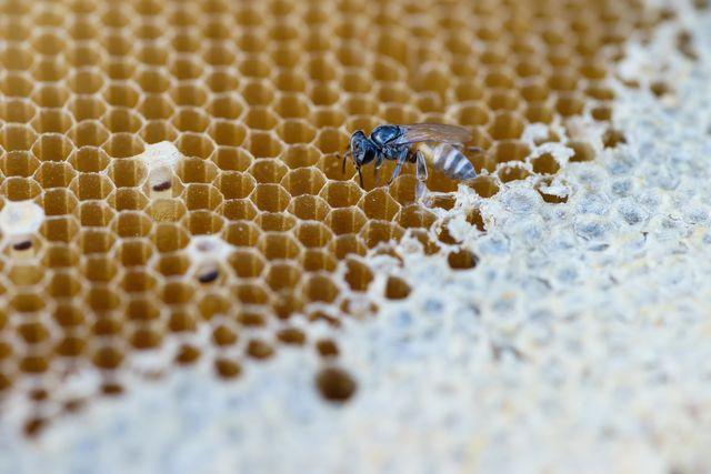 debellazione vespe tramite gel