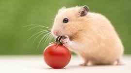antiparassitari, snack, terriccio