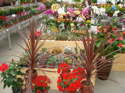 piante e fiori in esposizione