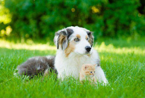 Cane e gatto a Asola (Lucca)