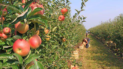 I principali prodotti disponibili a Scisciano sono frutta biologica