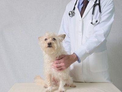 vendita farmaci per animali