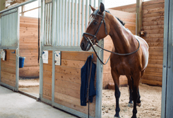 A range of high quality horse supplies