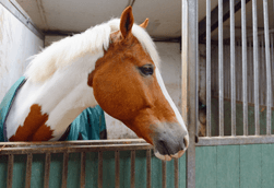 Horse feed, supplements and treats