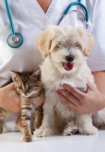 la mano di una veterinaria che tiene vicino un cane e un gattino