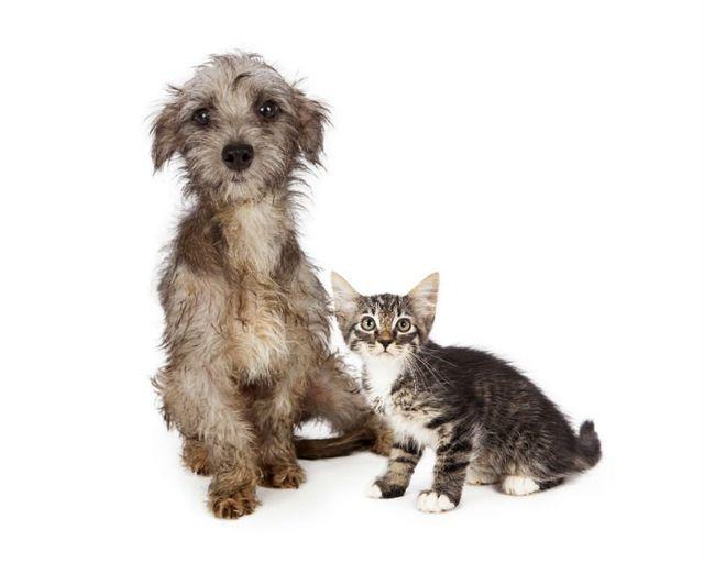 un cane bagnato e un gattino affianco