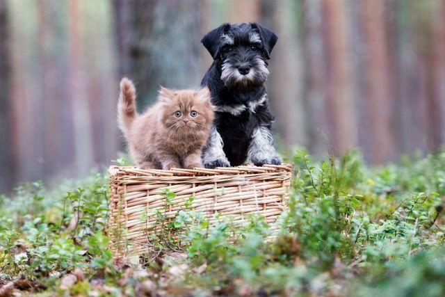 un cane e nero e un gattino in piedi su un cesto
