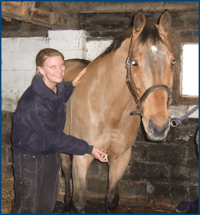 Horse being examined