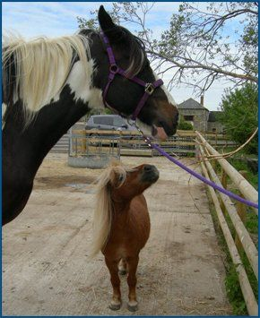 Horses being natural