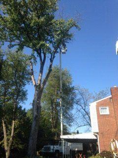 Tree Service Bethel Park, PA