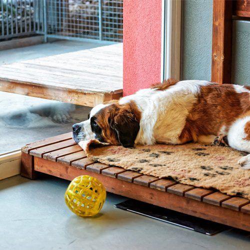 Dog Boarding – Brenham, TX – Creekside Veterinary