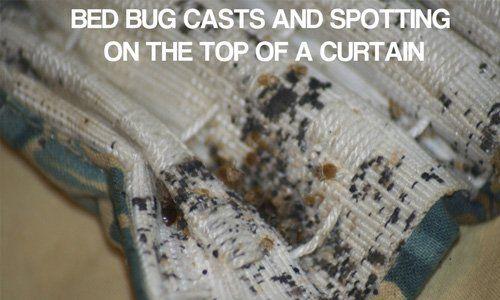 Bed bug control | Latham Pest Control