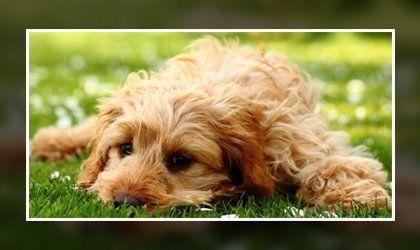 Fuss-free dog ear wash