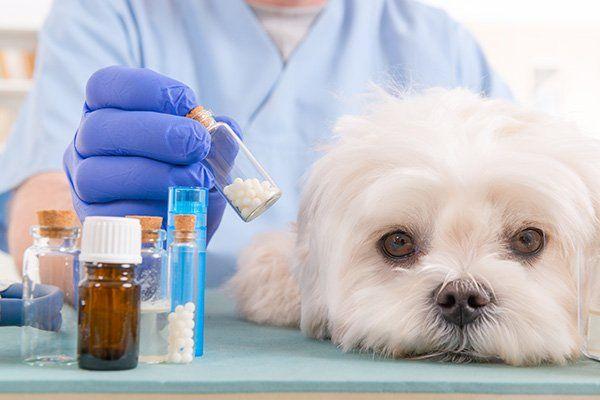 una dottoressa con in mano un flacone con delle pillole e accanto un cane Maltese bianco