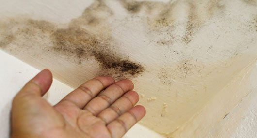 damp wall patches