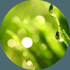trattamenti fitopatologici