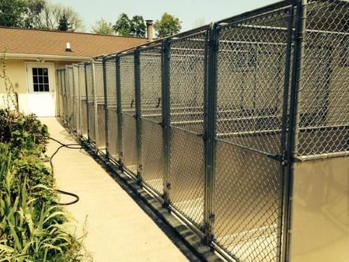 Pet Training Covington Ky Almost Home Pet Resort