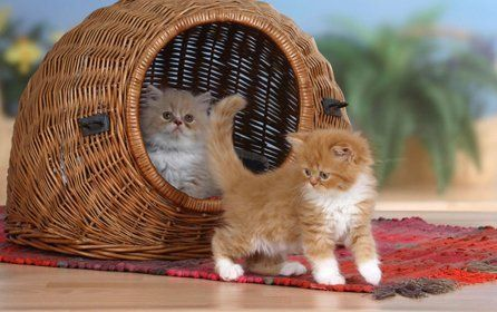 One kitten inside, and one outside, a round wicker basket on a red rug