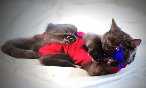 un gattino con un cappotto rosso