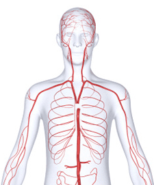 Chirurgia cardiovascolare