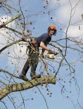 Hedge cutting - Buckley - Dean Eagles Tree Care Services - Pruning