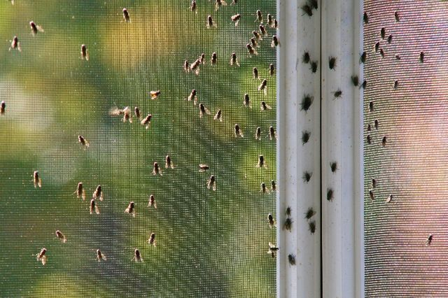 bug infestation on screened in porch