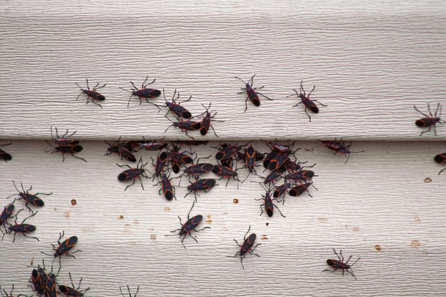 bug infestation on the siding of a house