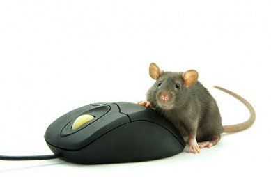Rodent Removal-Ithaca, NY - A-Arrow Exterminating CO