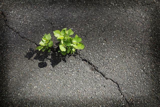 Asphalt Crack Filling Greensboro, NC