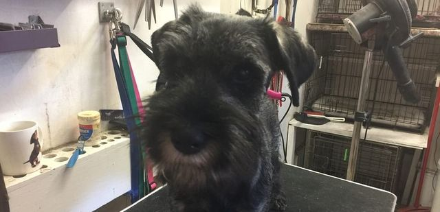 Dog Grooming Prices In Salisbury Town Country Grooming