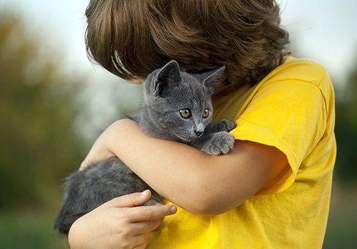 gatto tra le braccia di un bambino