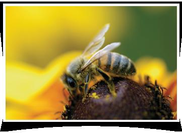 Bee Removal Laredo, TX