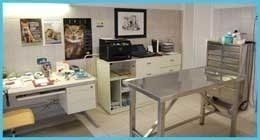 sala operatoria veterinario