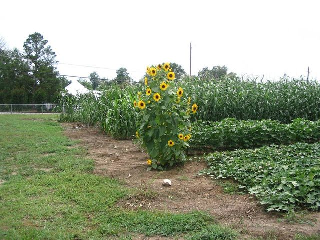 Crops Garden
