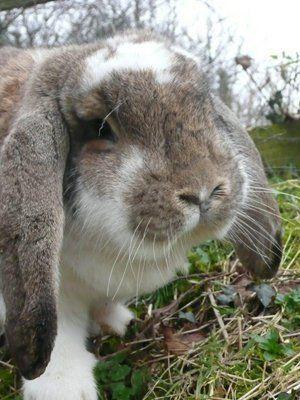big rabbit posing for the camera