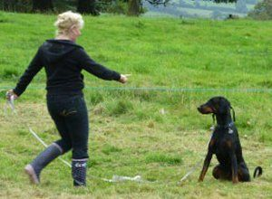 Dog trainer with doberman dog