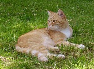 ginger and white tabby cat in long grass