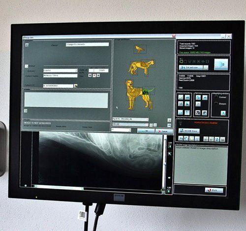 un monitor con delle immagini diagnostiche di un cane