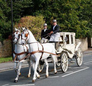 Light horse drawn carriage - UK, United Kingdom, England - North East Carriage Co Ltd - carriage