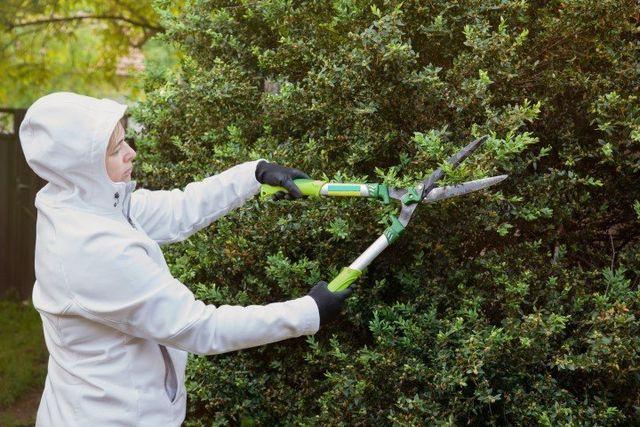servizio di giardinaggio e potaggio delle siepi