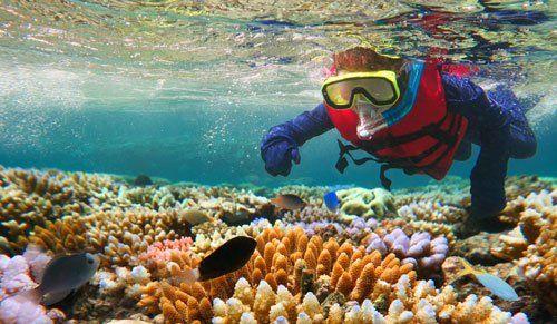 un subacqueo e vista di alcuni pesci e coralli