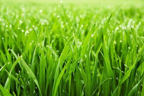 un prato verde
