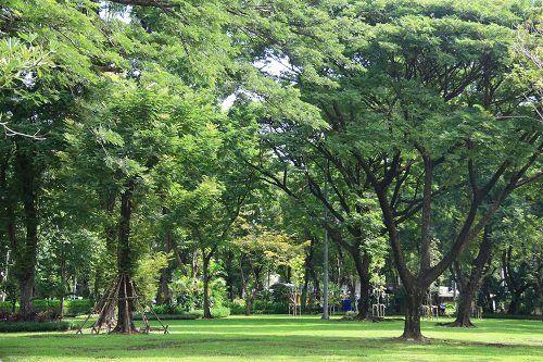 degli alberi in un parco