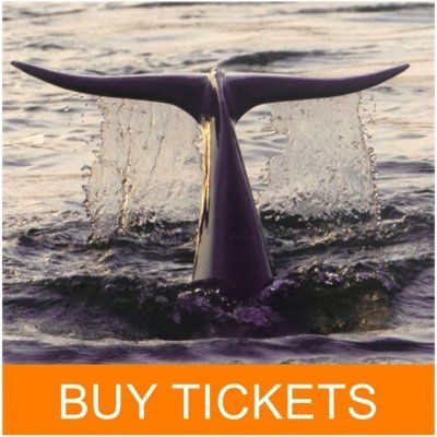 Buy tickets for 90-minute dolphin and nature tour on Hilton Head Island