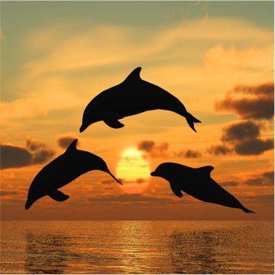 Sunset Dolphin Cruise on Hilton Head Island, SC